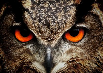 Are you a night owl? It's genetic